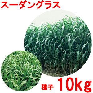 種子 スーダングラス 10kg