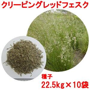 種子 クリーピングレッドフェスク 22.5kg×10袋