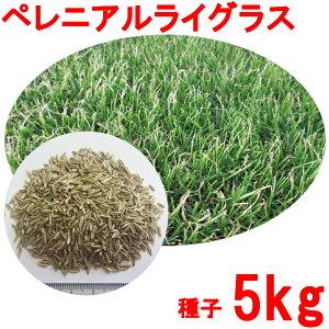 種子 ペレニアルライグラス 5kg