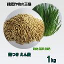 種子 えん麦(オーツヘイ) 殻つき 1kg