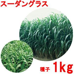 種子 スーダングラス 1kg