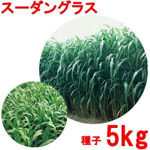 種子 スーダングラス 5kg