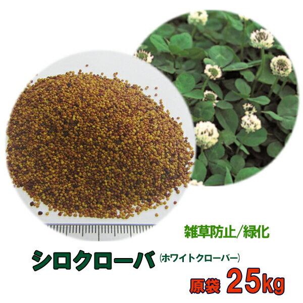 種子 シロクローバ 25kg 送料無料