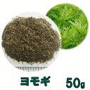 種子 ヨモギ 50g