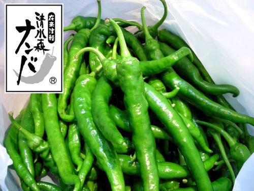 <収穫最盛期につき今だけ特別価格!>【清水森ナンバ®】青トウガラシ1kg ※配達日は指定できません。