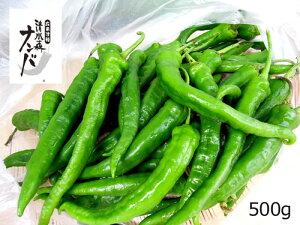【清水森ナンバ®】青トウガラシ500g※配達日は指定できません。