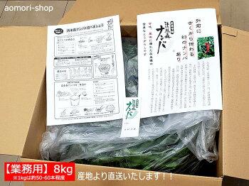 【清水森ナンバ®】青トウガラシ1kg※配達日は指定できません。