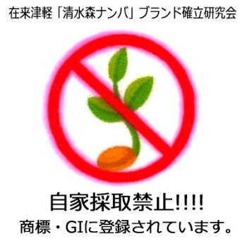 青森県産・在来津軽【清水森ナンバ®】赤トウガラシたっぷり1kg※冷蔵