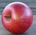 【送料無料】青森県産 無農薬りんご 「サンふじ」【約2kg 5〜7個入り】 【合同会社 まっかなほんと】