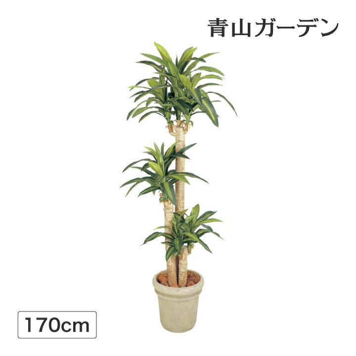 人工植物 造花/ドラセナ 幸福の木 1.7m /GD-149/フェイクグリーン/ディスプレイ/飾り