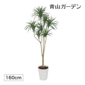 人工植物 造花 フェイク グリーン ディスプレイ 飾り タカショー / ドラセナ コンシンネ 1.6m /C