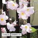 人工植物 造花/サクラガーランド大輪 24本セット/フェイクグリーン/ディスプレイ/飾り