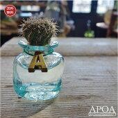 サボテンクラゲ♪スクエアタイプ/単品ガラス職人の手作りグラスにサボテンサボテン水耕栽培ガラスギフトプレゼントバリガラス