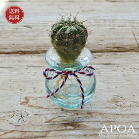 サボテン クラゲ1個・クリアサボテンとバリガラスお部屋で簡単人気の水耕栽培