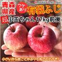 【超小玉】青森産 りんご 17kg 訳あり 有袋フジ 超小玉ちゃん 17kg箱入(内容量17kg前後)ダンボール箱でのお届けです リンゴ 販売 青森県産