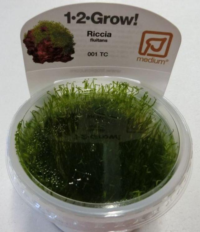 【組織培養水草】トロピカ社 1・2・GROW! リシア神戸店在庫