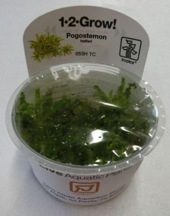 【組織培養水草】トロピカ社 1・2・GROW! ポゴステモン ヘルフェリー神戸店在庫