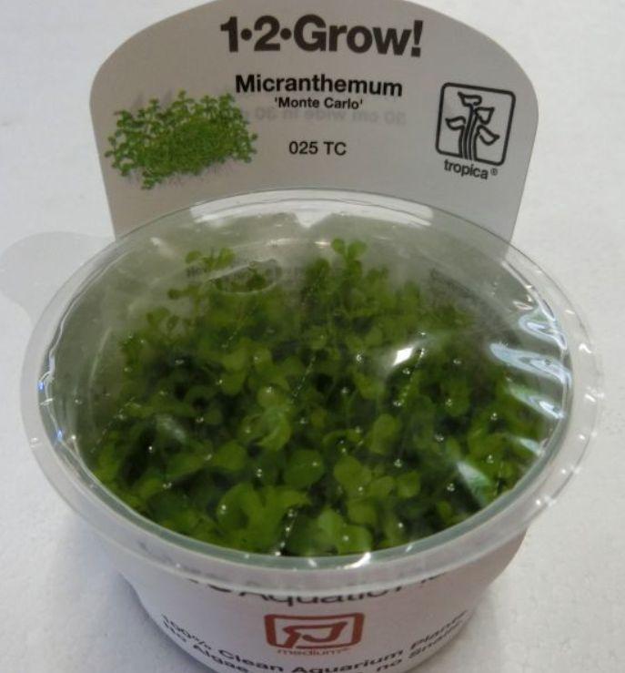 【組織培養水草】トロピカ社 1・2・GROW! ニューラージパール神戸店在庫