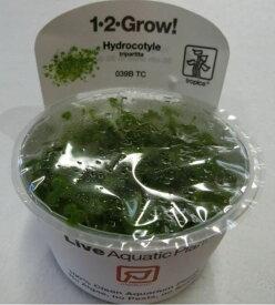 【組織培養水草】トロピカ社 1・2・GROW! オーストラリアン ハイドロコタイル神戸店在庫