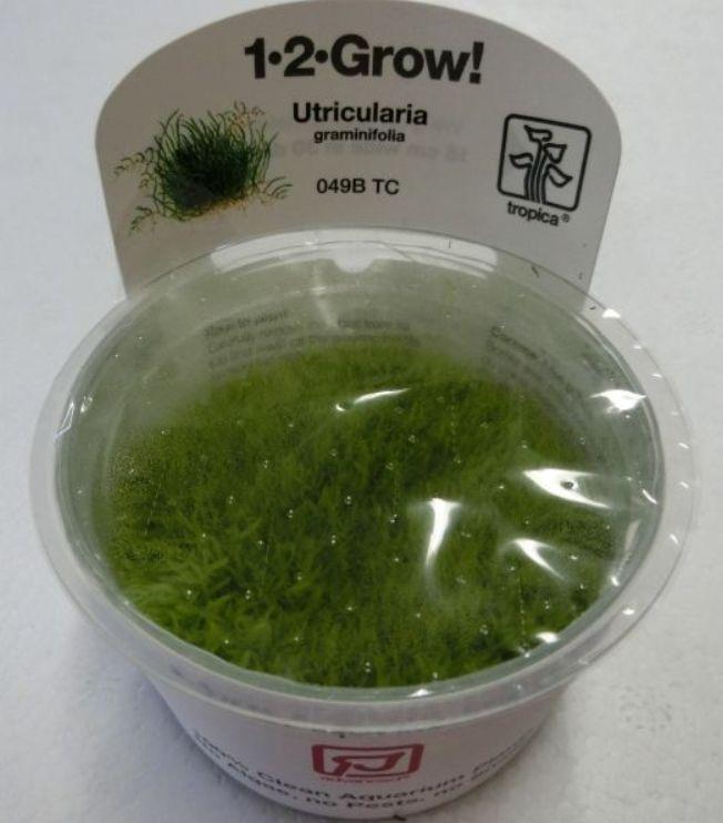 【組織培養水草】トロピカ社 1・2・GROW! ウォーターローン神戸店在庫