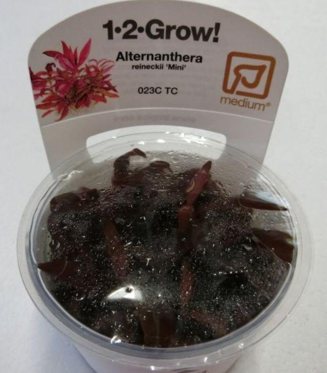 【組織培養水草】トロピカ社 1・2・GROW! アルテナンテラ レインキー神戸店在庫