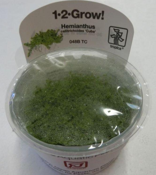 【組織培養水草】トロピカ社 1・2・GROW! キューバパールグラス神戸店在庫