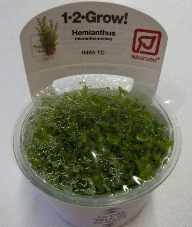 【組織培養水草】トロピカ社 1・2・GROW! パールグラス神戸店在庫