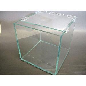 スクエア キューブ ガラス水槽 20cm 【アクアリウム テラリウム 苔リウム】