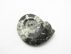アンモナイト化石 モロッコ産 1個売り プチギフト 転勤 退職 お礼 母の日 敬老の日 ギフト