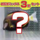 ハギMIX 5匹セット! 海水魚 ハギ 【PHセール対象】【ハギ】