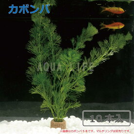 (水草)カボンバ (10本)水草 メダカ・金魚藻 カモンバ 送料無料
