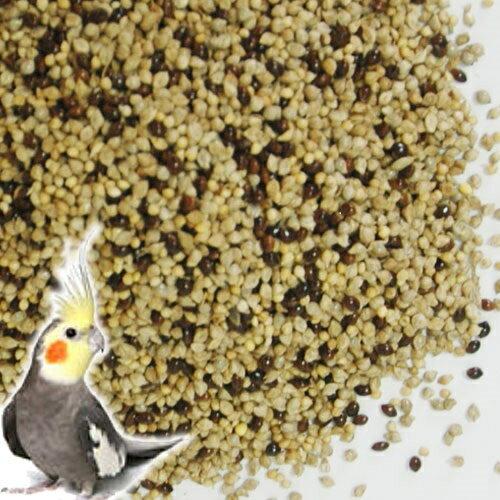 小鳥のえさ 鳥 餌 / 国産無農薬シード オリジナルミックス 1kg