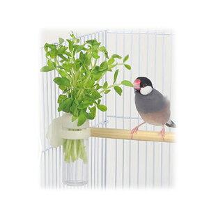 インコ 餌入れ 菜差し / サンコー 小鳥のベジタブルポット