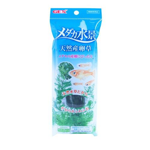 GEX メダカ水景 天然産卵草【あす楽】