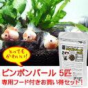 (金魚) ピンポンパール Mサイズ 【5匹セット】 & ピンポンパールのえさ (金魚/観賞魚/生体/かわいい/飼育/餌/えさ/フード)