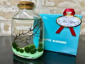 水草 まりも瓶ウイスキーボトルグリーン 栄養剤付きセット