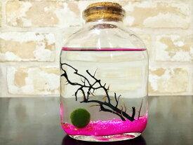 ピクシーシュリンプ【ホロホロシュリンプ】ウイスキーボトル5匹入り+(死着補填分として予備1匹) (ピンク)