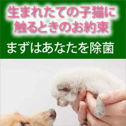 アンチウイルスアクア/強力タイプ【薄めて使える】除菌剤3パックセットI次亜塩素水次亜塩素が効くあの時期です。