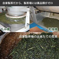 べにふうき緑茶100g有機無農薬のべにふうき煎茶無農薬栽培一筋