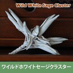 浄化用ホワイトセージクラスター20g(浄化用ホワイトセージ)