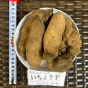 タネイモ イチョウ芋500g(約5コ)×2つ 千葉県産
