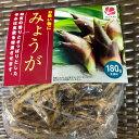 【タネ球根 みょうが】150g(地下茎約20コ) 絵写真栽培説明書付き