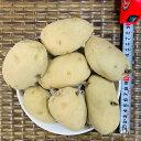 【栽培用 じゃがいもタネ シンシア】1000g【約7コ】フランス生まれのジャガイモ 芽は浅く長期貯蔵向き