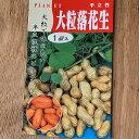 【ピーナッツのタネ】半立性落花生:1デシリットル (約55粒)露地直まきは5月初旬から 千葉県産