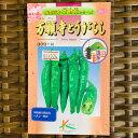 万願寺とうがらし種 1.2ミリリットル入り(約70粒)辛味果の少ない肉厚甘長とうがらし
