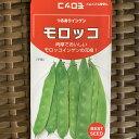 【インゲン豆のタネ】つるありモロッコ 100ミリ(約100粒)☆露地直まきは5月初旬から