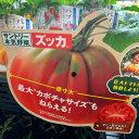 欧州グルメトマト苗 ズッカ 生食・加熱料理に 1苗 サントリーフラワーズ 9センチポット