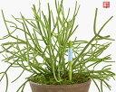 サスティー Mサイズ 5〜6号鉢用 グリーン 観葉植物や鉢物の水分チェッカー 直径18センチくらいサイズまでの鉢 プランターに 植物の水…