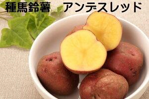 じゃがいも種芋アンデスレッド 1キロ約10〜18コ北海道産 岡山県産種馬鈴薯検査合格済 種芋サイズ混合 秋植え・春植えが可能 苗