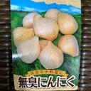 無臭にんにく 球根 種 200g 約12球 8〜11月植え 6〜8月収穫 ※日時指定不可
